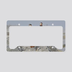 circle of puffins License Plate Holder