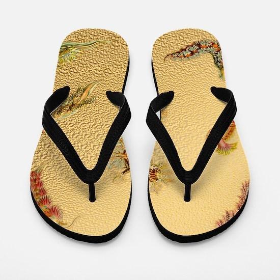 Haeckel Nudibranchia Flip Flops