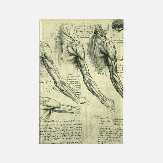 Male Anatomy by Leonardo da Vinci Rectangle Magnet