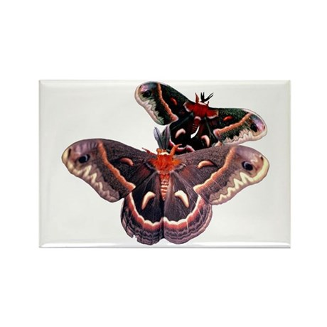 Cercropia Moth Rectangle Magnet