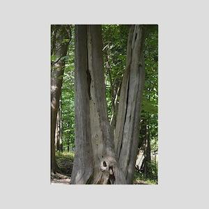Natural Bridge Trees Virginia Rectangle Magnet