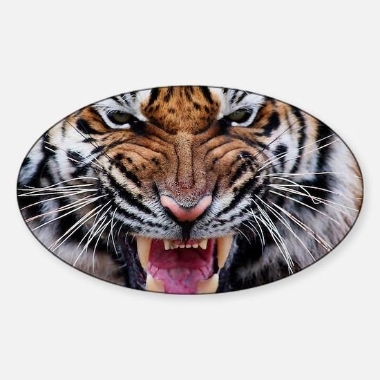 Big Cat Tiger Roar Sticker (Oval)