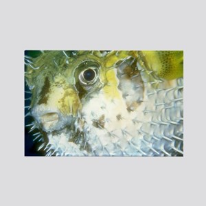 Puffer Fish Magnets