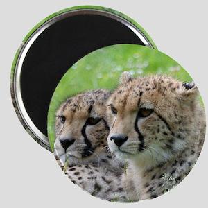 Cheetah009 Magnet