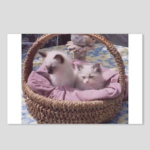 Ragdoll Kittens Postcards (Package of 8)