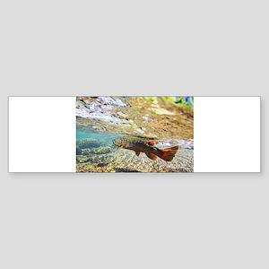 Brown Trout Sticker (Bumper)