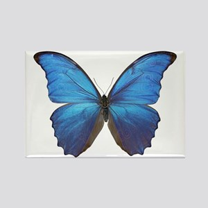 MORPHO DIDIUS D Rectangle Magnet