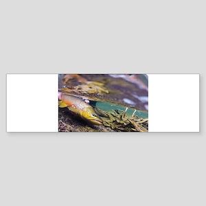 Brown Trout - Catch and Release Bumper Sticker