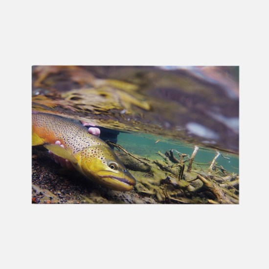 Brown Trout - Catch and Release Magnets