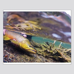 Brown Trout - Catch and Release Posters