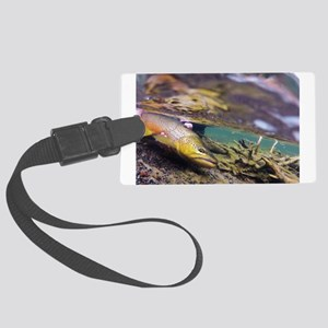 Brown Trout - Catch and Release Luggage Tag