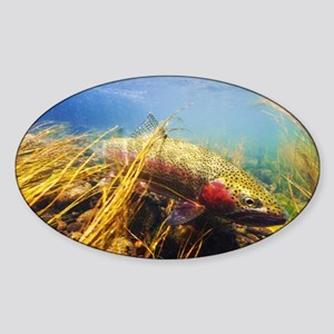 Rainbow Trout - Fly Fishing Sticker