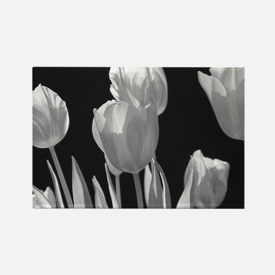 Black and White Tulips Rectangle Magnet