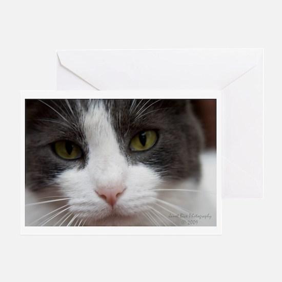 Mooky head shot with watermark Greeting Card