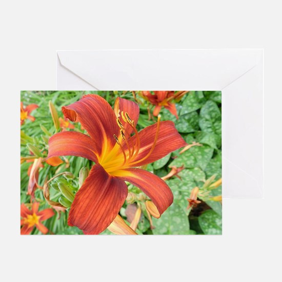 Red Macro Flower Greeting Card