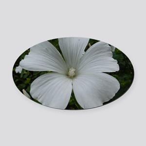 White Hibiscus Oval Car Magnet
