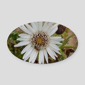 White Flower Oval Car Magnet