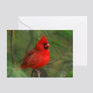 Male Cardinal Christmas Card