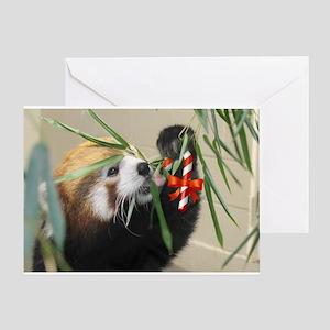 Red Panda Treat Greeting Cards