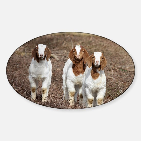 Smiling goats Sticker (Oval)
