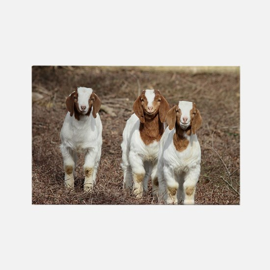 Smiling goats Rectangle Magnet
