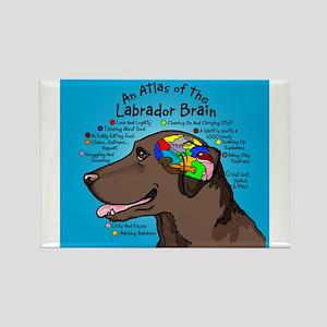 Chocolate Lab Brain Magnets
