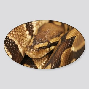 Ball Python Sticker (Oval)