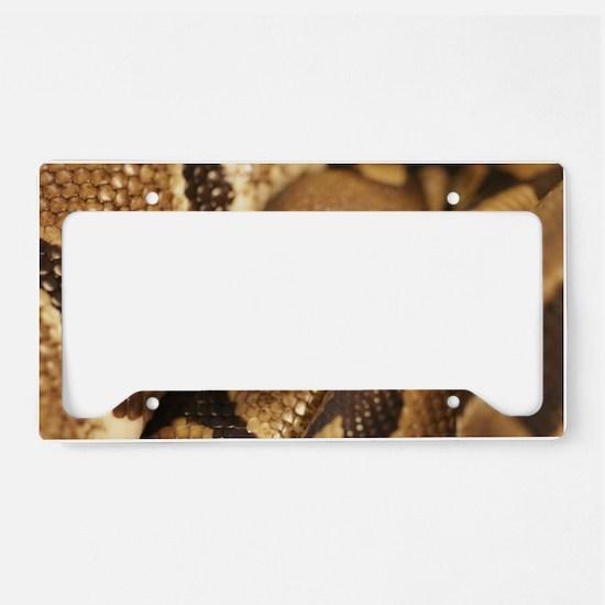 Ball Python License Plate Holder