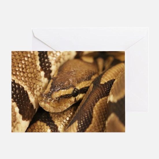 Ball Python Greeting Card