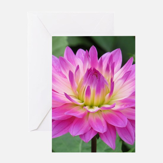 Purple Yellow Dahlia Greeting Cards