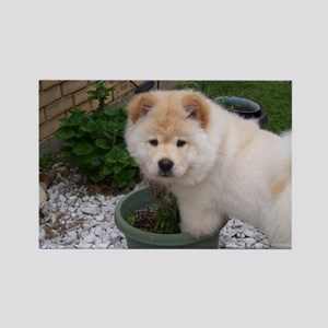 White Chow Chow Puppy Magnets