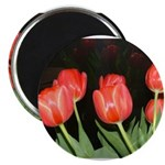 Red Tulips Magnet