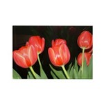 Red Tulips Rectangle Magnet