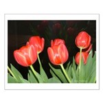 Red Tulips Small Poster