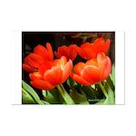 Red Tulips #6 - Mini Poster Print 11X14