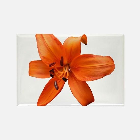 Orange Lilly Magnets