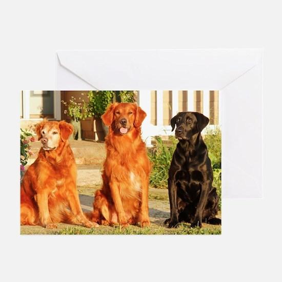 2014 DogDayz Blue Skies Greeting Cards (Pk of 10)
