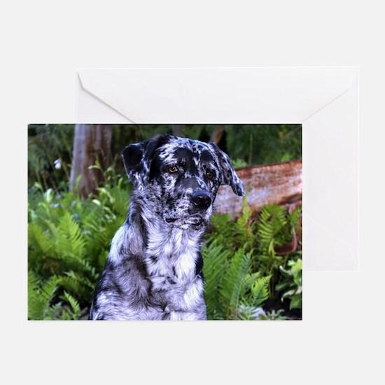 2014 Dogdayz Cammo Greeting Cards (Pk Of 10)