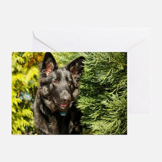 2014 DogDayz Yogi Greeting Cards (Pk of 10)
