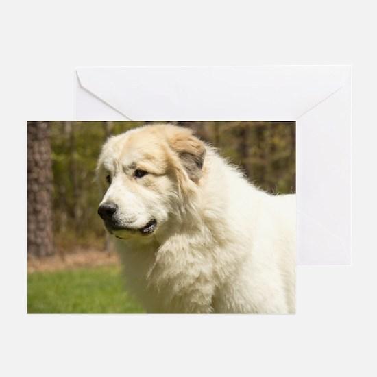 2014 DogDayz PJ Greeting Cards (Pk of 10)