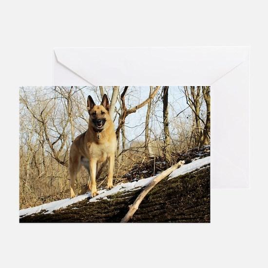 2014 DogDayz Rookie Greeting Cards (Pk of 10)