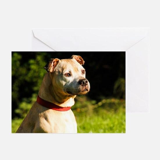 2014 DogDayz Sam Greeting Cards (Pk of 10)