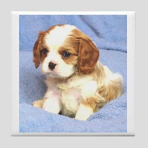 Cavalier Puppy Wilmington Tile Coaster