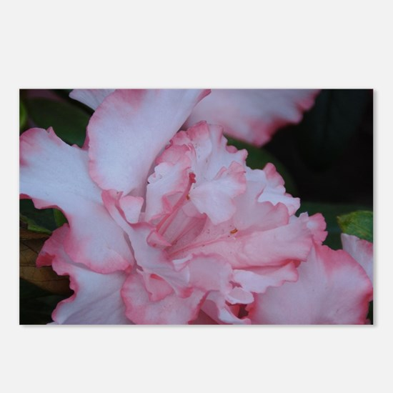 Macro Flower Postcards (Package of 8)