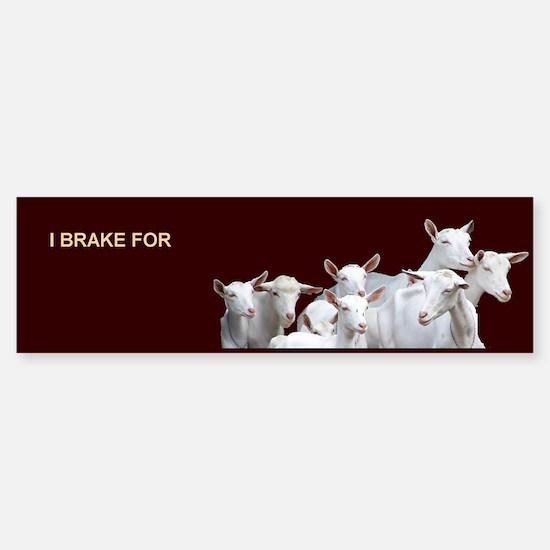 Saanen Dairy Goat Sticker (Bumper)