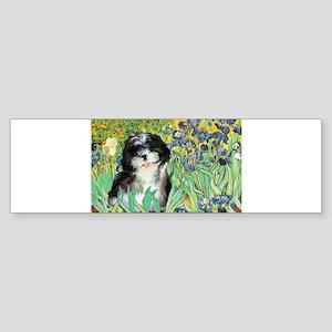 Irises - Shih Tzu 12 Bumper Sticker