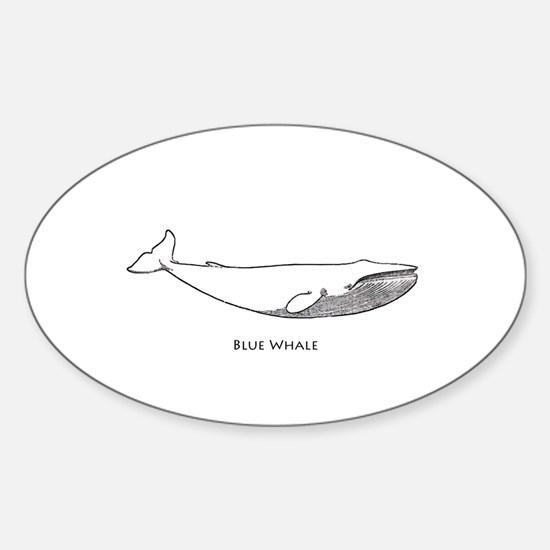 Blue Whale (line art) Decal