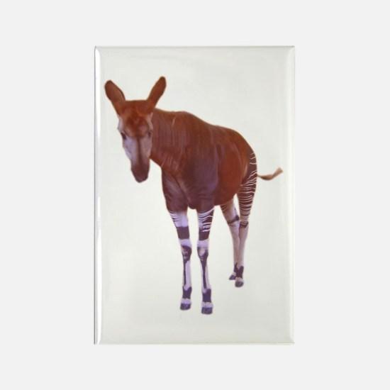 okapi 3 Rectangle Magnet (100 pack)