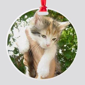 Cat Shelter Felix Round Ornament