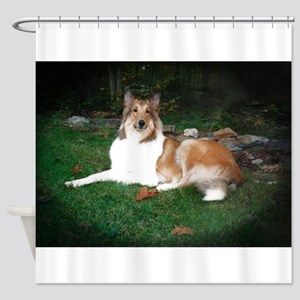 Collie laying Shower Curtain